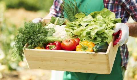 Impact of Pandemic on Organic Food Industry