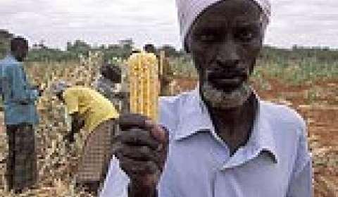 What FDI spells for farmers
