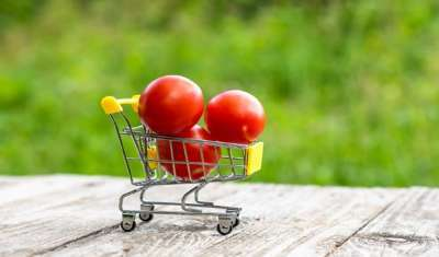 The E-commerce Boost: Remodeling of Organic Food Business